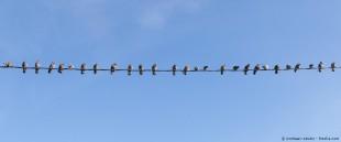 160129_Vogelschwarm_Fotolia_Blog